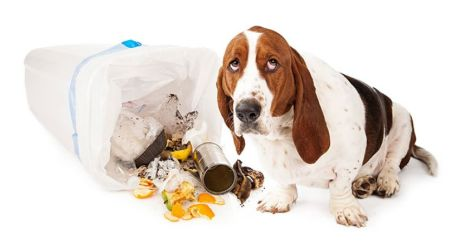 How-to-keep-your-dog-from-raiding-the-trash